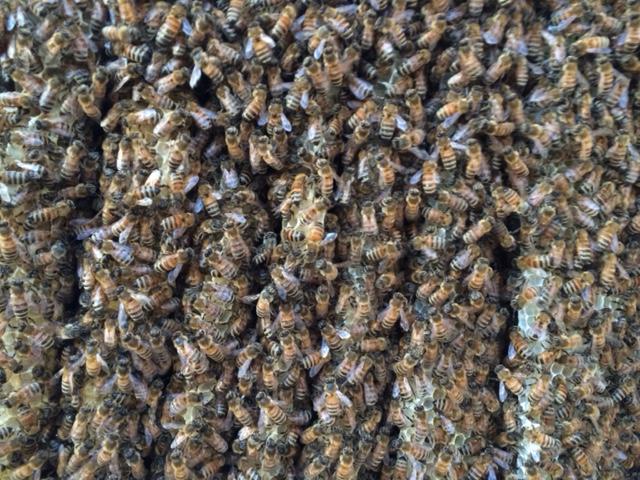 Flores amor de las abejas - Houston Chronicle