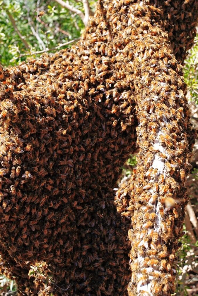 493da-bees
